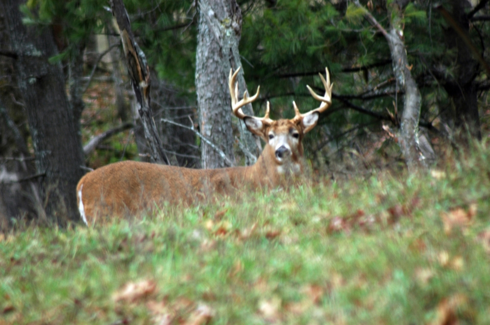 How to Identify A Quality Guided Hunt
