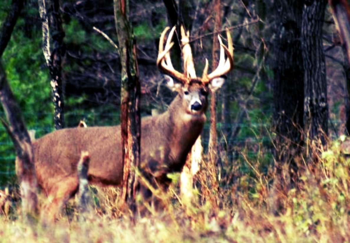 wisconsin whitetail preserve hunts