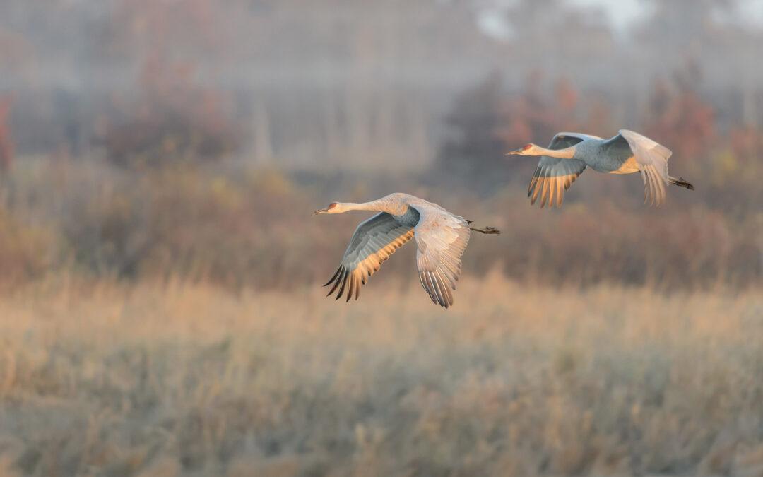 Wisconsin's Best Bird Watching